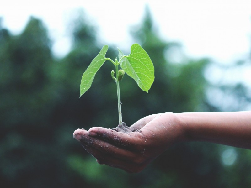 growth hand little 1072824